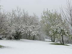 27 avril 2013 sous la neige
