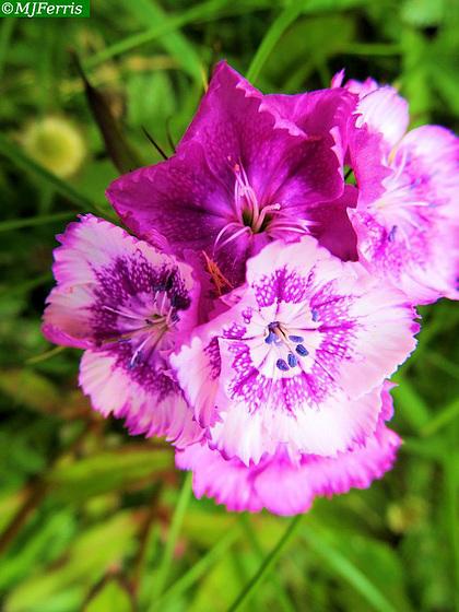02 colour in the garden