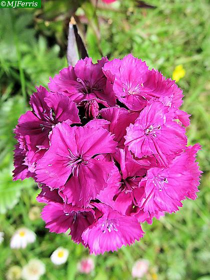 03 colour in the garden