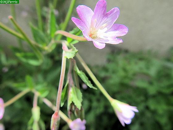 04 colour in the garden