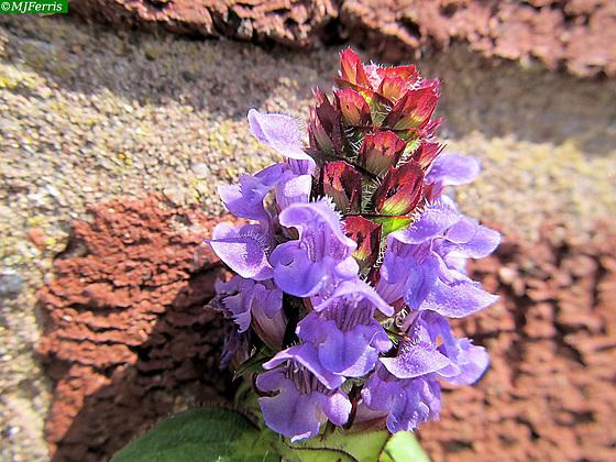 11 colour in the garden