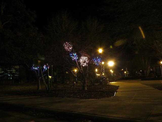 First Christmas in North Carolina ..