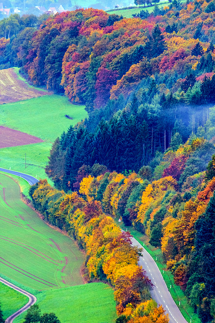 Colors of Fall (240°)