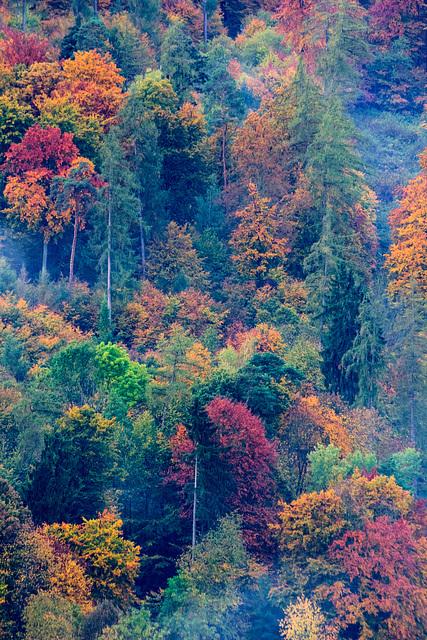 Colors of Fall - Herbstfarben II (225°)
