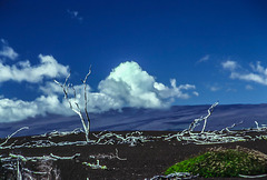 Devastation Trail, Mauna Loa, Hawaii, Hi, Nov. 1980