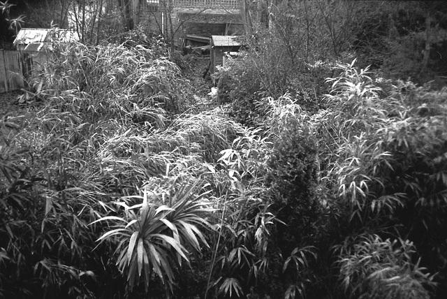Garden SW9.