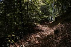 Chemin dans la vallée du Steïr