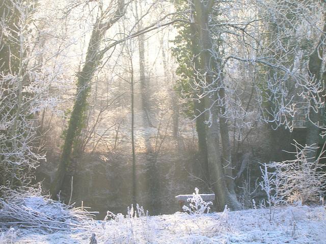 rayons de soleil dans bois enneigé