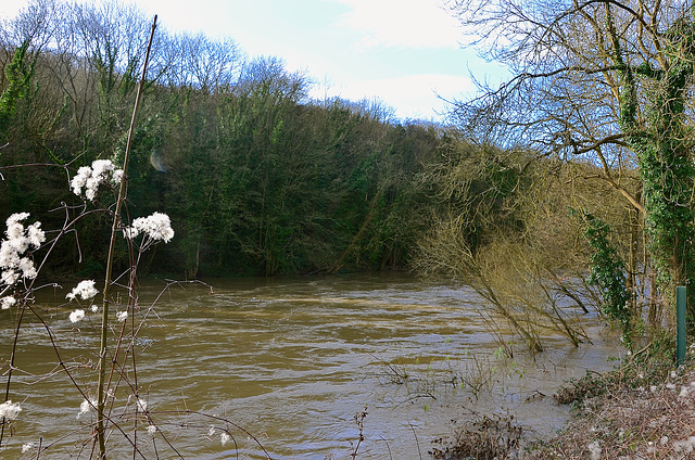 Swollen River Severn, Ironbridge Shropshire