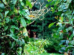 Between bushes