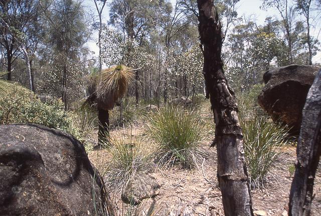 Typical bush landscape