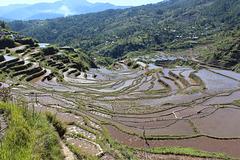 Rice Terraces, Maligcong
