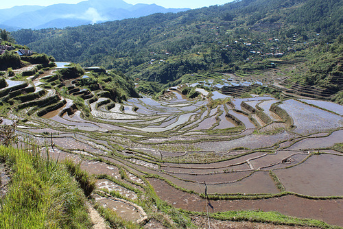 Rice Terraces, Maligcong