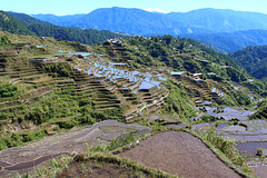 Maligcong Rice Terraces