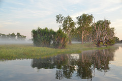 Kakadu morning
