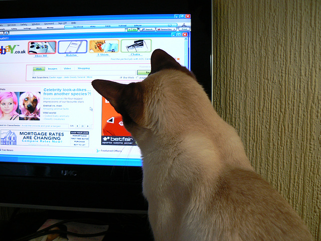 Oscar checking out the headlines