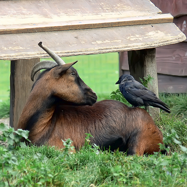 Peacefull coexistence