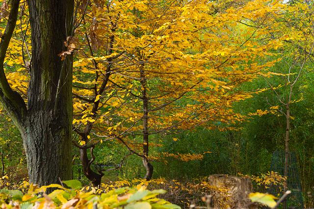 Herbst DSC03617
