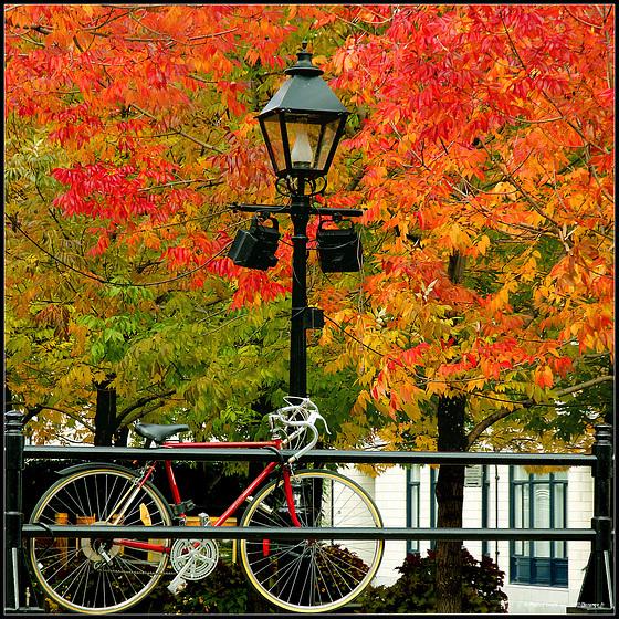 #58  Autumn memories