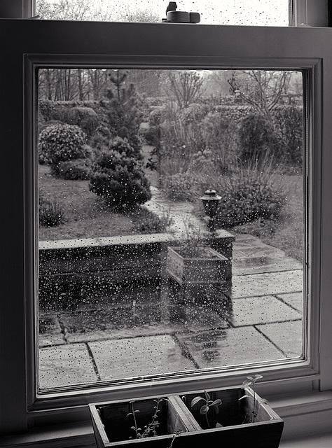 Garden Through the Rain
