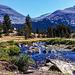 Dana Fork of Tuolumne River, Yosemite NP, Ca, September 1978 (090°)