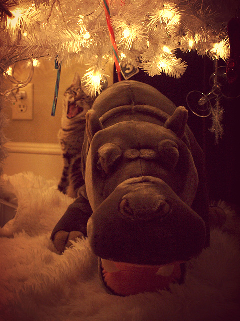 I got a hippopotamus for Christmas!