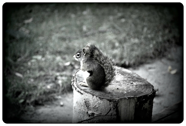 A Chipmunk meditation