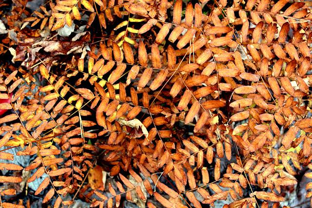 Ferns in autumn