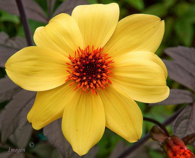 Sunshine in a Flower
