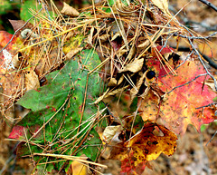 Leaves and needles