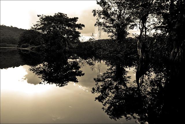Marais de Kaw, Guyane, 2009.