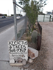 Parlons cactus / Cactus language