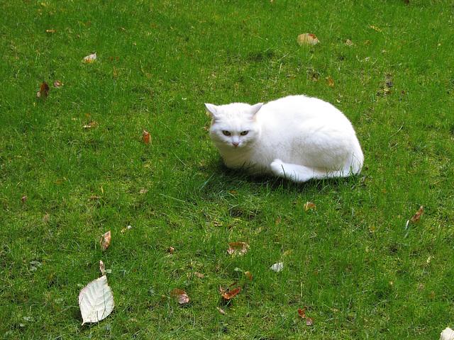 Gruß an die Katz in Beilngries