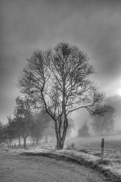 Misty Morning - Nebliger Morgen (120°)