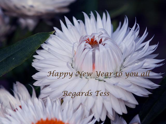 happy new year Explore
