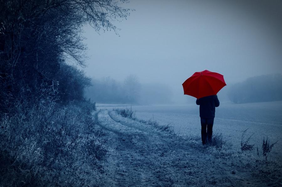 Dans les champs perdu dans les brumes de l'hiver