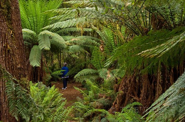 Through the Fern Forest