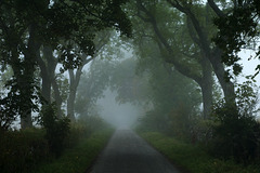 Misty Morning, Foulis, Evanton, Ross-shire