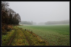 Chemin dans la brume