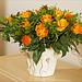 Blumen im Arbeitszimmer