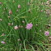 Chives ..