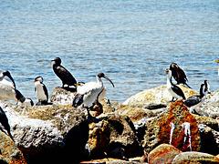 Sunbathing birds