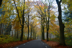 Autoweg in Rhenen