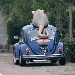 A Beetle and a Rat