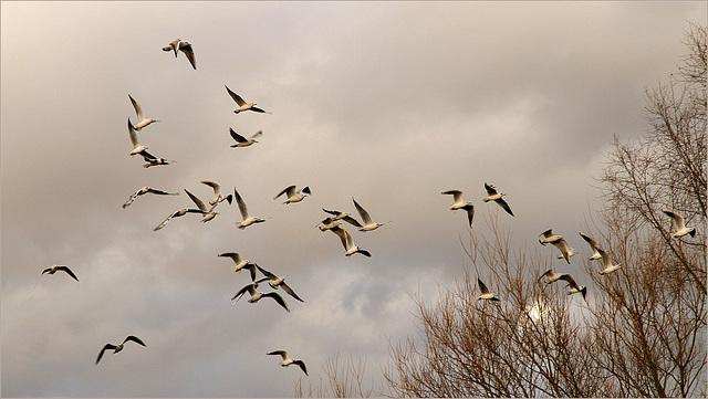 Les oiseaux (2)