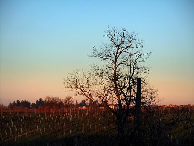 l'ultima luce sulle vigne