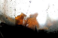Herbstleuchten hinter Glas