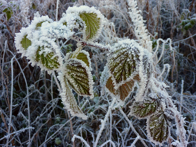 Another touch of frost