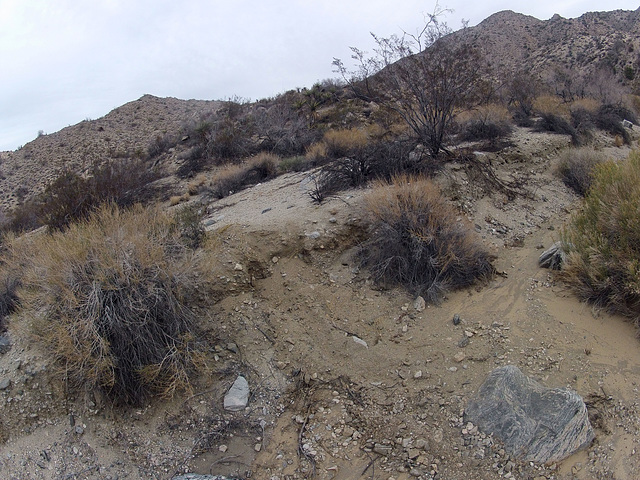 Long Canyon (01969)