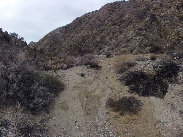 Long Canyon (11017)